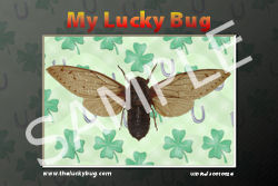 The Lucky Bug
